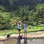 Die saftig grünen Reisterrassen Südostasiens